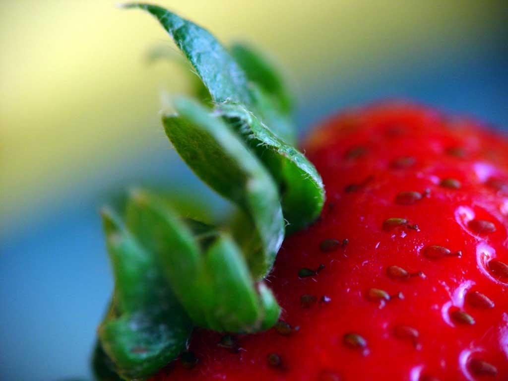 Strawberry_1024x768[1]